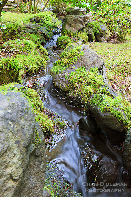 Shallow stream flows through moss covered rocks in Natural Garden (Shizsen-shiki-teien) in Portland Japanese Garden