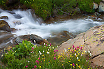 San Juan Mountains, CO<br /> Alpine stream flowing through a  wildflower filled meadow in American Basin