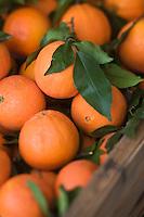 Europe/France/06/Alpes-Maritimes/Nice:   Oranges de Menton sur le Marché du Cours Saleya