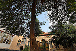 Israel, Carob tree (Ceratonia Siliqua) in Jerusalem<br />