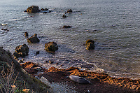 An elephant seal has hauled out and sleeps on the beach while off shore, pelicans rise like a crew cut on rocks off shore at Año Nuevo State Reserve on the California coast.