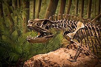 Mesalands Community College's Dinosaur Museum has been open to the public since May 2000.  The museum is home to the world's largest collection of bronze skeletons, fossils, and replicas of prehistoric creatures. The bronzes,created in the College's foundry, were poured by members of Mesalands staff, assisted by a number of community volunteers. The Museum was the first in the world to display a Torvosaurus skeleton, a rare carnivore from the Jurassic that is related to Tyrannosaurus Rex .