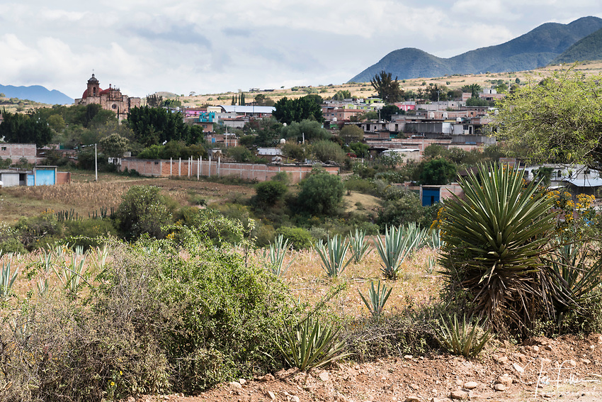 The town of San Marcos Tlapazola across a field of espadin maguey plants.  At right is a madrequiche maguey.