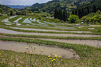 "The curvy rice paddies and fields of the Oyama Senmaida rice terraces undulating up the mountainside, are the very image of a Japanese farm village.   Because of the increase in machinery use and the aging  farmer population in Japan, terraced rice fields are rapidly disappearing as it must be done mostly by hand.  Oyama Senmaida is now maintained by an unusual co ownership system.  This both helps preserve this landscape and gives urban dwellers a chance to try their hand at farming. Thanks to this innovative system the terraced rice paddies of Oyama Senmaida Chiba continue to be cultivated to this day.  Terraced rice fields are common in Japan's mountainous countryside, where agriculture has been active for thousands of years. They are built in stair-like tiers along the slope of a mountain or a valley and are often called ""Senmaida"", or thousand rice fields, because the field is divided into many small sections. Stones and mud are used to separate the sections and prevent the water from leaking out of them."