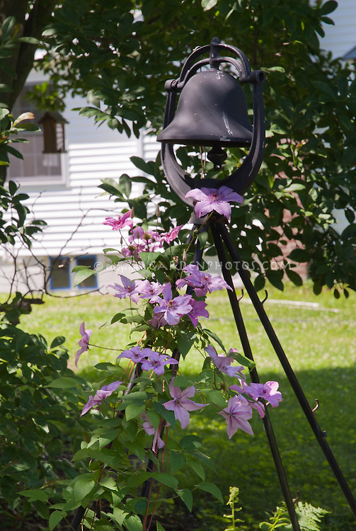 Shade garden with birdhouse, clematis vine in pink flowers, trellis on vine plant red flowers, vine plants identification, vine mandevilla plant care, vine plant purple flowers, vine plant with berries, puncture vine with pink flowers, weeds with pink flowers, vine with small pink flowers,