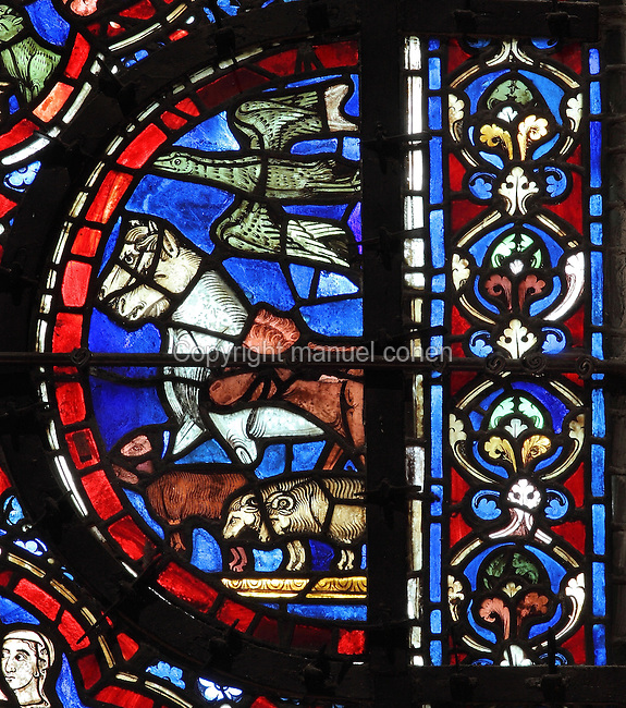 Horses, sheep and birds entering the ark, from the Life of Noah stained glass window, 13th century, in the nave of Chartres cathedral, Eure-et-Loir, France. Chartres cathedral was built 1194-1250 and is a fine example of Gothic architecture. Most of its windows date from 1205-40 although a few earlier 12th century examples are also intact. It was declared a UNESCO World Heritage Site in 1979. Picture by Manuel Cohen