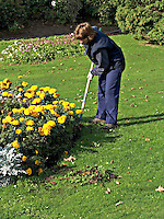 Gardener working tidying flowerbeds in the parks gardens..©shoutpictures.com..john@shoutpictures.com