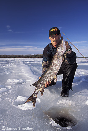 Man icefishing northern Pike