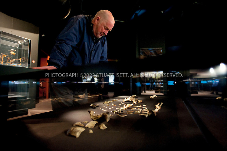 2/10/2008--Seattle, WA, USA..Sandy McKean, 64, looks at Lucy, the first Australopithecus afarensis skeleton discovered, on display at Seattle's Pacific Science Center as part of the 'Lucyu's Legacy' exhibit. ..Lucy was discovered on November 24, 1974 near Hadar in Ethiopia by Tom Gray andDonald Johanson in the Middle Awash of Ethiopia's Afar Depression. The exhibit cost about $2.25 million to mount which included a $500,000 fee to the government of Ethiopia, which plans to use the money raised during Lucy?s U.S. tour for cultural and scientific programs. The science center had hoped 250,000 people would visit during the exhibit?s five-month run, which ends March 8, 2009. But attendance, so far,  has been far less..©2009 Stuart Isett. All rights reserved.