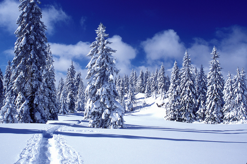 snow, trail, mountains, Switzerland, Vaud, Jura Mountains, Europe, A trail runs through a snow covered forest of evergreens in the winter in the Jura Mountains.