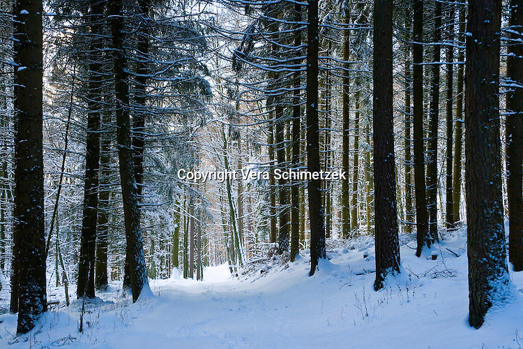 Europe, DEU, Germany, North Rhine-Westphalia, snowy winter trees....Europa, DEU, Deutschland, Nordrhein-Westfalen, verschneite Winterbaeume......[Copyright / Contact: Vera Schimetzek, Bornstrasse 5, 58300 Wetter, Germany, cell: 0049.(0)151.21220918, schimetzek@web.de, www.schimetzek-foto.de, publication is subject to a fee and report, the General Terms and Conditions apply. Die Veroeffentlichung ist melde- und honorarpflichtig, die AGB sind bindend.]