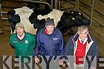 Jim Cremins, Jim O'Connor and Richard Hartnett with the two year old friesian heifer that sold for €1,990  at Castleisland Mart last Friday the heifer had her first calf the Monday prior of the sale  .
