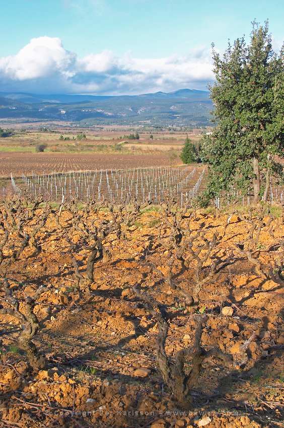 Domaine Jean Baptiste Senat. In Trausse. Minervois. Languedoc. Vines trained in Gobelet pruning. Carignan grape vine variety. Vineyard in winter. France. Europe. Vineyard. Mountains in the background.