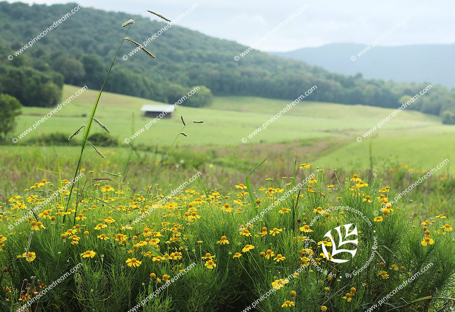 Gorgeous hilly landscape of mountains with yellow wildflowers in foreground in Tennessee, USA - Free Stock Photo.