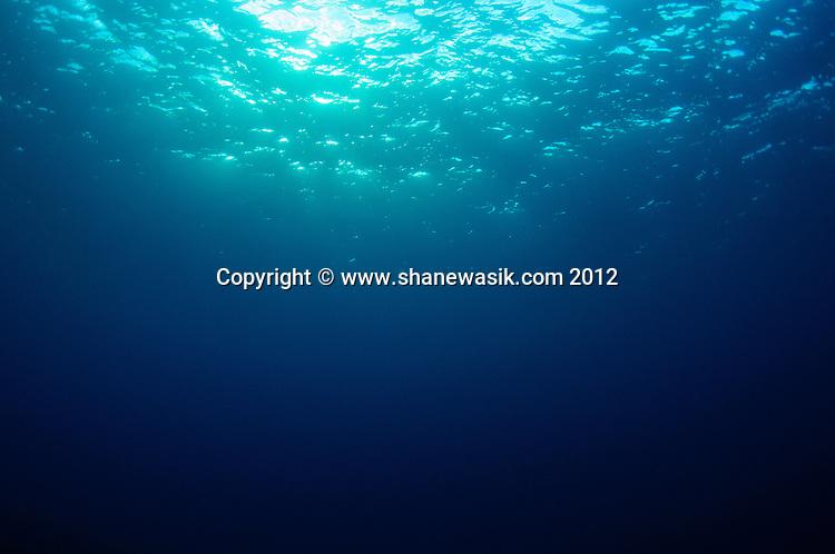 Underwater dappled light near sunset at the Kermadec Islands.