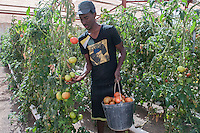 Agriculture Africa 04