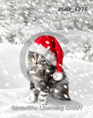 Marek, CHRISTMAS ANIMALS, WEIHNACHTEN TIERE, NAVIDAD ANIMALES, photos+++++,PLMP6976,#xa# ,kittens,cats