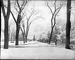 Frederick Stone negative. Waterbury Town Green is covered with snow 1905.