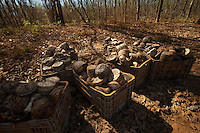 Grandes plantações de soja, milho e algodão cercam o Parque Indígena do Xingu  (PIX) .Habitados pelas etnias Aweti, Ikpeng, Kaiabi, Kalapalo, Kamaiurá, Kĩsêdjê, Kuikuro, Matipu, Mehinako, Nahukuá, Naruvotu, Wauja, Tapayuna, Trumai, Yudja, Yawalapiti, o parque ocupa área de 2.642.003 hectares na região nordeste do Estado do Mato Grosso, De acordo com o IMEA - Instituto Mato-Grossense de Economia Agropecuária declarou último dia 7 de agosto de 2015 no informativo 365 divulgou dados novos das safras de soja em MT com a safra 14/15consolidando-se com mais um ano de área e produção recordes. Por meio do método de Sensoriamento Remotoa nova área de 9,01 milhões de hectares apresenta-se 6,8% acima da área da safra 13/14. A produtividade jáconsolidada de 51,9 sc/ha elevou a produção para 28,08 milhões de toneladas. Os novos dados da safra 15/16aumentaram ainda mais a expectativa de safra recorde já esperada no último relatório. A nova área de 9,2 milhõesde hectares baseia-se na conversão de área de pastagem em agricultura observada há algumas safras. Acontinuidade de investimento em tecnologia da nova safra eleva a projeção de produtividade para 52,6 sc/ha,refletindo sobre a produção que deve bater um novo recorde em 2016, de 29 milhões de toneladas. Apesar docrescimento contínuo, a nova temporada deve atingir o menor avanço da produção desde a safra 10/11. Querência, Mato Grosso, Brasil.Foto Paulo Santos30/07/2015