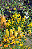 Yellow and orange color theme garden with glass globe ornament flowers, gold color theme plantings, clematis tangutica type