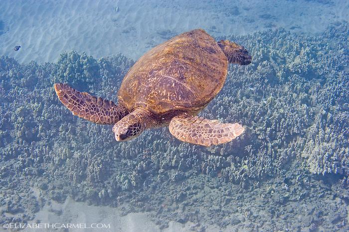Turtle 6