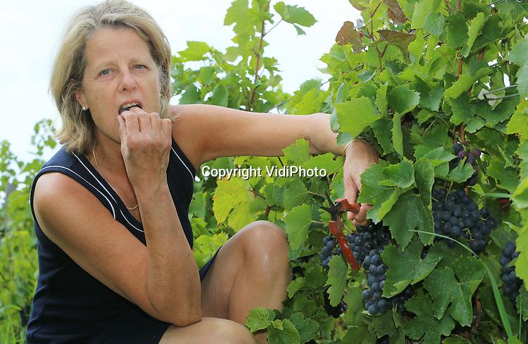 Foto: VidiPhoto<br /> <br /> LEYNES (Fr) &ndash; De 60-jarige Anke de Boissieu-van Bergen uit het Franse Leynes in de Bourgogne is donderdag aan het werk in de 12 ha. grote wijngaard van Chateau de Lavernette. Samen met haar man en zoon runt ze een exclusieve wijnboerderij van biologisch-dynamische beaujolais-wijnen. Over drie weken begint de oogst, die naar verwachting dit jaar bijzonder goed zal zijn. De kwaliteit van de wijn wordt de laatste drie weken bepaald en precies deze week is de zon gaan schijnen na een lange en vochtige periode. De lang houdbare beaujolais van de Hollands-Franse wijngaard gaat de hele wereld over en is ook bij diverse Nederlandse slijterijen en restaurants te koop. De druiven voor de beaujolais moeten met de hand geplukt worden, waardoor de wijn ook een stuk duurder is. E wijnboerderij Chateau de Lavernette is al vanaf 1596 in handen van de familie De Boisieu.