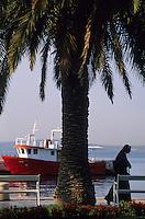 Europe/Croatie/Dalmatie/Split: Sur le quai du port palmier,  bateau de pêche et religieuse