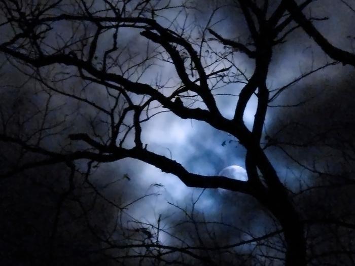 &quot;Susurran al bosque cantos de magia en el invierno. <br /> <br /> Reviven las sombras esclavas de su conjuro. <br /> <br /> Los lobos expectantes, rodean los aquelarres&quot;.<br /> <br /> <br /> El canto del lobo / luna del lobo, 1 de enero de 2018 / Panam&aacute;.<br /> <br /> Edici&oacute;n de 25 | V&iacute;ctor Santamar&iacute;a.