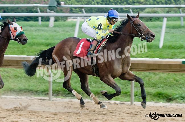 Pearl Turn winning at Delaware Park on 9/5/13