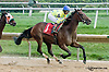 Pearl Turn winning at Delaware Park on 9/5/13