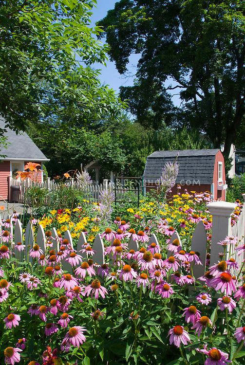 Summer flower garden with natives Echinacea purpurea purple coneflowers, Heliopsis, Veronicastrum Fascination, Hemerocallis orange daylilies, barn, blue sky on sunny day, perennials in lush bloom