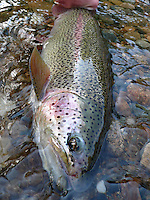 Rainbow trout from a small stream in south central Alaska.