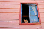 BUENOS AIRES - FEBRUARY 12: A child with a cat looks out of a window in the La Boca neighborhood of Buenos Aires, Argentina on February 12, 2009.