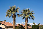 Rooftops of homes with palm trees and snow on mountains in Palm Desert