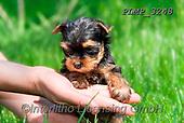 Marek, ANIMALS, REALISTISCHE TIERE, ANIMALES REALISTICOS, dogs, photos+++++,PLMP3248,#a#, EVERYDAY