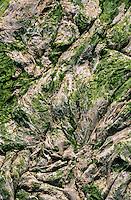 Europe/France/Bretagne/22/Côtes d'Armor/Env du Cap Fréhel: Algues  vertes séchées dans la baie de la Frenaye