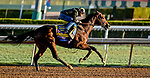 October 28, 2019 : Breeders' Cup Classic entrant McKinzie, trained by Bob Baffert, exercises in preparation for the Breeders' Cup World Championships at Santa Anita Park in Arcadia, California on October 28, 2019. Scott Serio/Eclipse Sportswire/Breeders' Cup/CSM