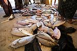 Trumpet Emperor (Lethrinus miniatus) and Spangled Emperor (Lethrinus nebulosus) fish in market, Hawf Protected Area, Yemen