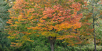 Panorama of autumn trees