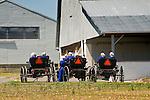 Spring wedding day. Amish women in buggies. .