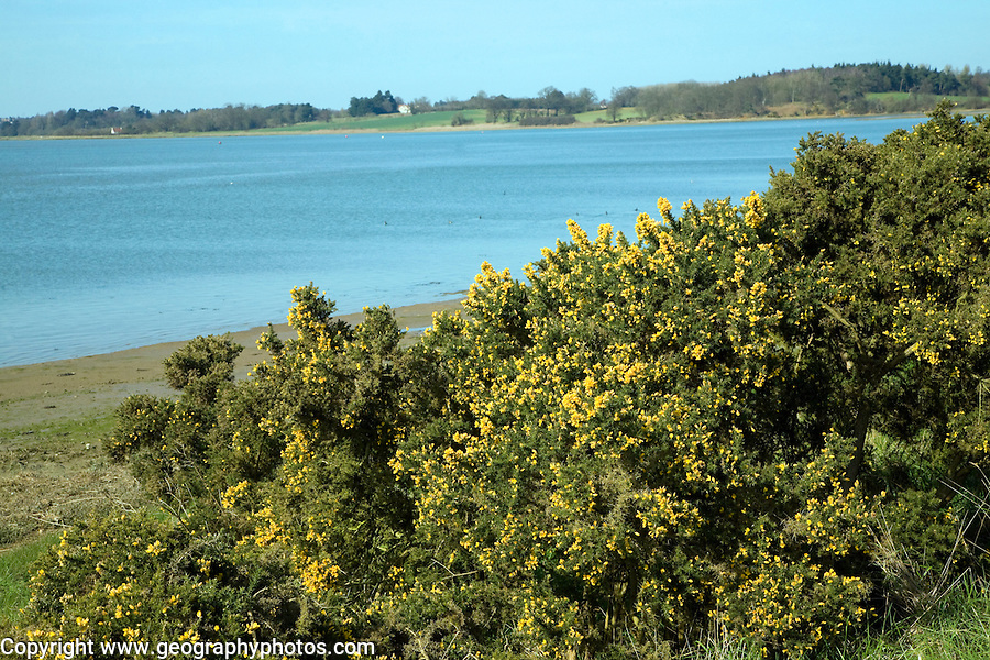 View upstream of the River Deben from Sutton, Suffolk, England
