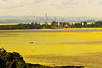 Hauraki Gulf (with the skyline of Auckland in background), seen from Waiheke Island, near Auckland, New Zealand