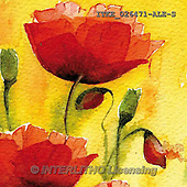 Isabella, FLOWERS, BLUMEN, FLORES, paintings+++++,ITKE026471-ALE-S,#f# ,everyday