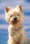 Terrier against blue sky