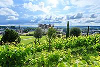 France, Indre-et-Loire (37), Amboise, château d'Amboise, vue depuis le vignoble en haut du jardin