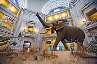 Smithsonian Washington DC Natural History Museum