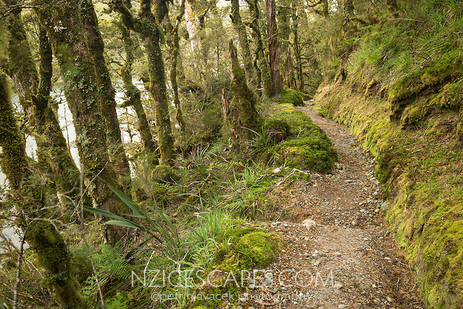 Hiking track through rainforest and along Lake Howden on Greenstone Track, Fiordland National Park, Southland, South Island, UNESCO World Heritage Area, New Zealand, NZ