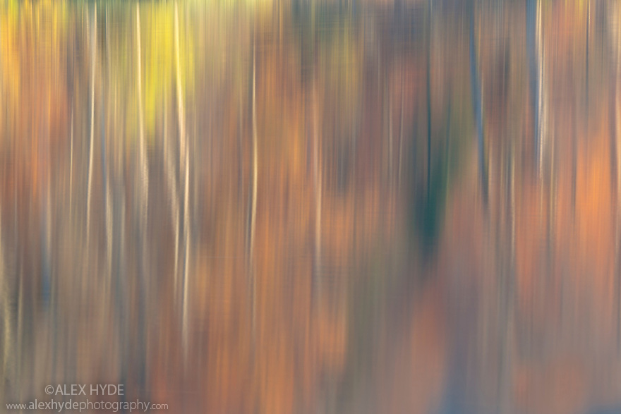 Abstract of autumnal reflections in the Upper Lakes, created using a long exposure. Plitvice Lakes National Park, Croatia. November.