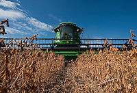 Harvesting soybeans on the Greenfields' farm in Skaneateles New York.