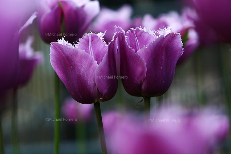 Paris (Ile de France)<br /> <br /> Fleurs dans un jardin.<br /> <br /> Flower in a garden.